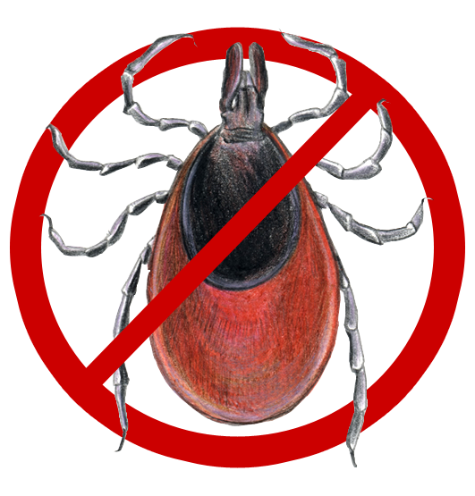 The Truth about Lyme Disease and Ticks in Ireland